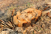 Boise Tree Service|Stump Grinding