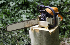 Boise Tree Service|Stump Removal