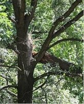 Boise valley tree trimming emergency tree service