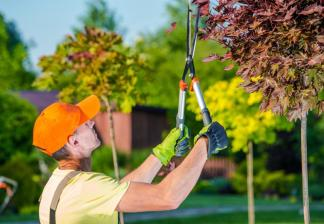 Pruning Trees in Boise, Idaho